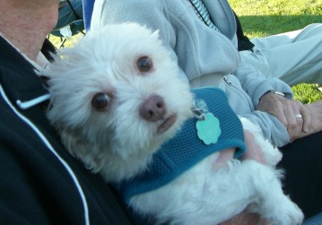 Bailey on Don's lap (3)